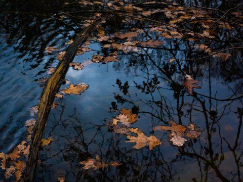 Klánovický rybník