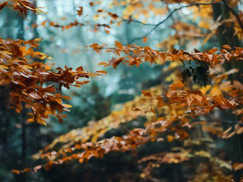 V klánovickém lese