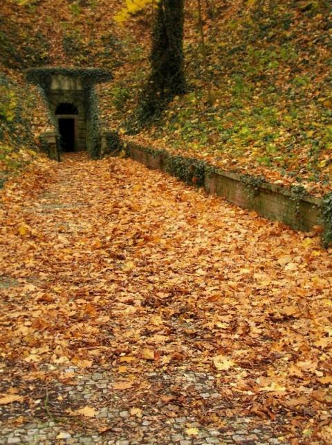 Podzimní Stromovka