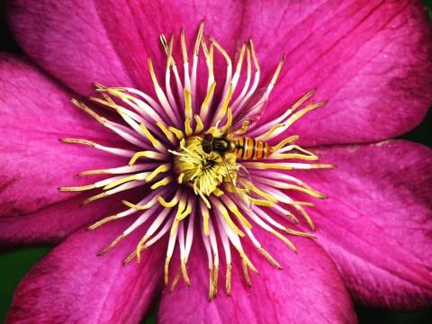Život v květu